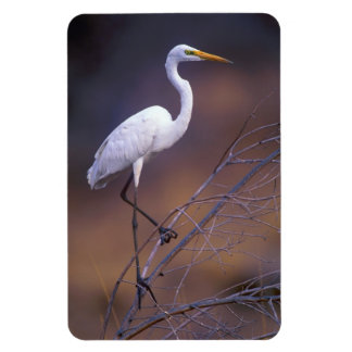Great white egret rectangular photo magnet