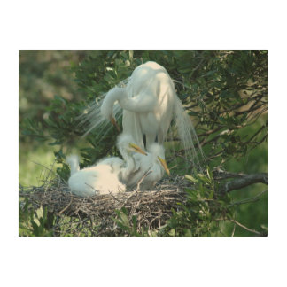 Great White Heron Nesting Wood Canvases