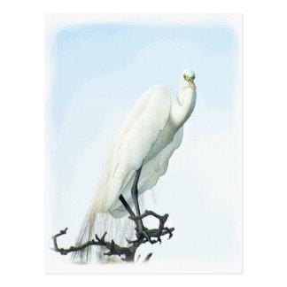 Great White Heron Portrait Postcard