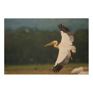 Great White Pelican (Pelecanus Onocrotalus) Wood Wall Decor