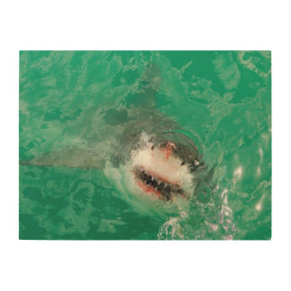 Great White Shark1 Wood Canvases