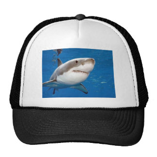Great White Shark Cap