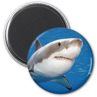 Great White Shark Fridge Magnets