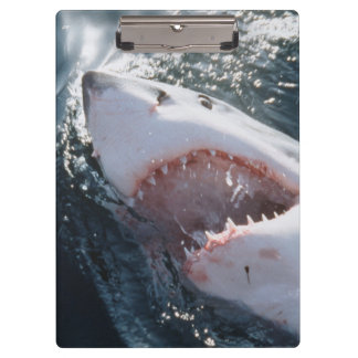 Great White Shark on sea Clipboard
