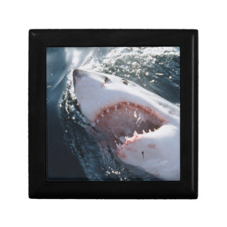 Great White Shark on sea Gift Box