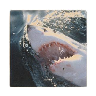Great White Shark on sea Maple Wood Coaster
