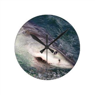 Great white shark spy hopping wallclocks