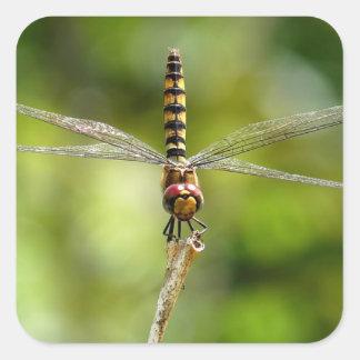 Greater Crimson Glider Dragonfly Stickers
