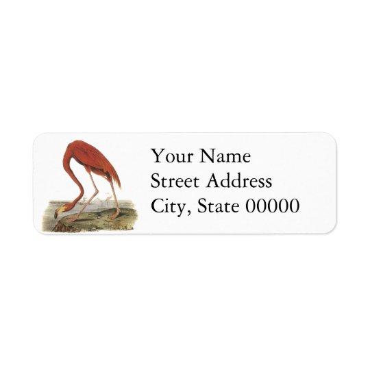 Greater Flamingo, John Audubon