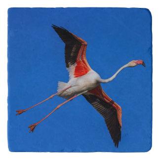 Greater flamingo, phoenicopterus roseus trivet