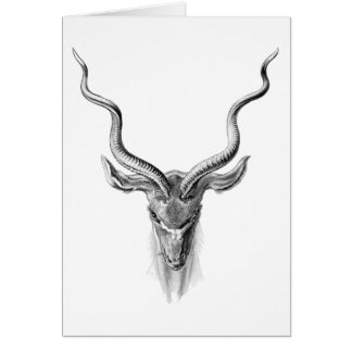 Greater Kudu Card