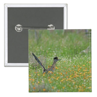 Greater Roadrunner, Geococcyx 15 Cm Square Badge