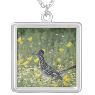 Greater Roadrunner, Geococcyx californianus, Silver Plated Necklace