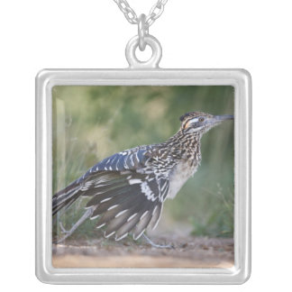 Greater Roadrunner in Texas 2 Silver Plated Necklace