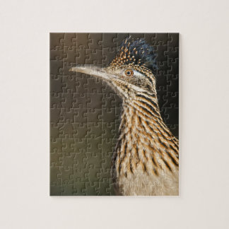 Greater Roadrunner in Texas Jigsaw Puzzle