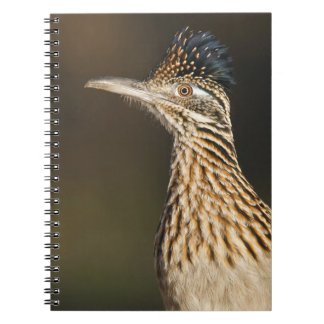 Greater Roadrunner in Texas Notebook