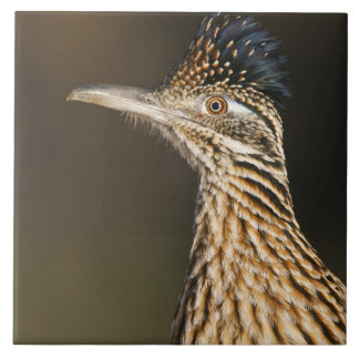 Greater Roadrunner in Texas Tile