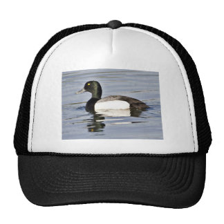 Greater Scaup drake Trucker Hats