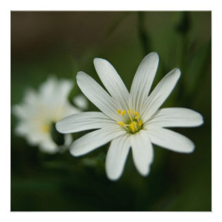 Greater Stitchwort Personalized Announcements