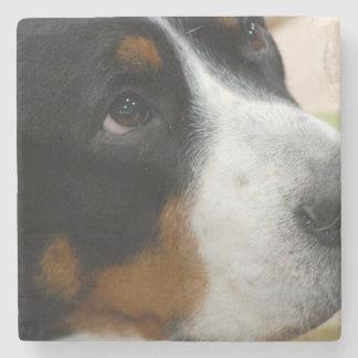 Greater Swiss Mountain Dog Stone Coaster