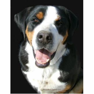 Greater Swiss Mountain Dog: Happy Pin Photo Sculpture Badge