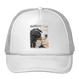 Greater Swiss Mountain Dog  Hat