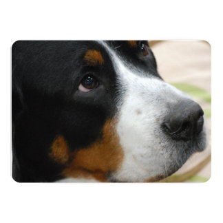 Greater Swiss Mountain Dog 13 Cm X 18 Cm Invitation Card