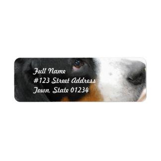 Greater Swiss Mountain Dog Mailing Label Return Address Label