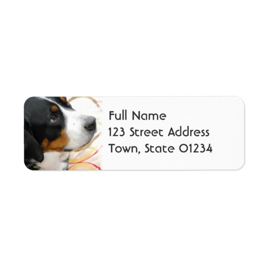 Greater Swiss Mountain Dog Mailing labels