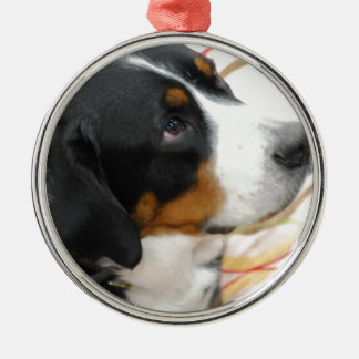 Greater Swiss Mountain Dog  Ornament