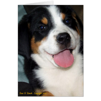 Greater Swiss Mountain Dog Puppy Greeting Card