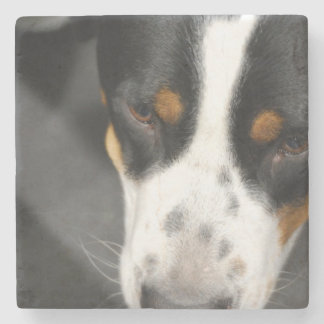 Greater Swiss Mountain Dog Stone Coaster