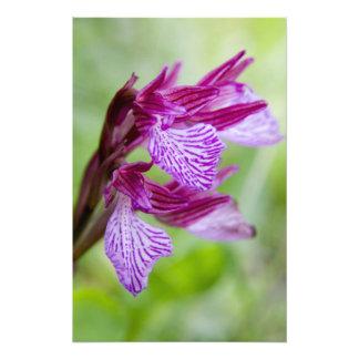 Greece, Crete. Butterfly orchid in bloom Photo