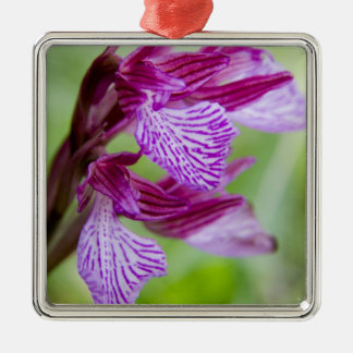 Greece, Crete. Butterfly orchid in bloom Silver-Colored Square Decoration