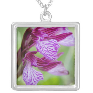 Greece, Crete. Butterfly orchid in bloom Silver Plated Necklace