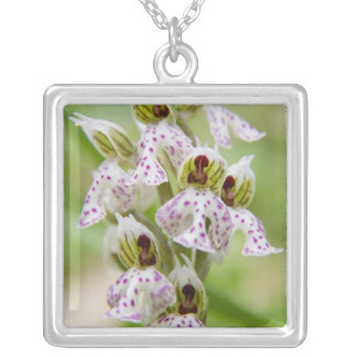 Greece, Crete. Orchid in bloom Orchis Silver Plated Necklace