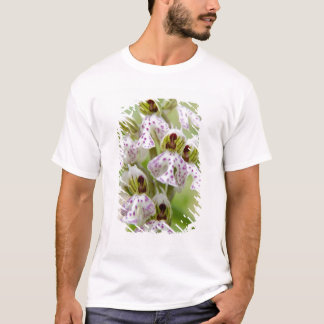Greece, Crete. Orchid in bloom Orchis T-Shirt