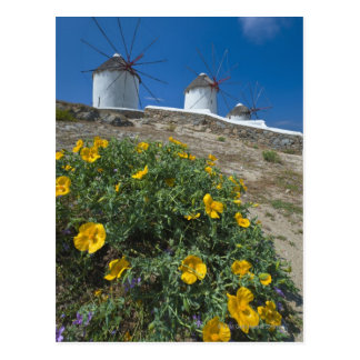 Greece, Cyclades Islands, Mykonos, Flowers near Postcard