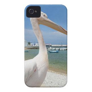 Greece, Cyclades Islands, Mykonos, Pelican on iPhone 4 Covers