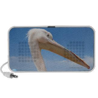 Greece, Cyclades Islands, Mykonos, Pelican on Laptop Speaker