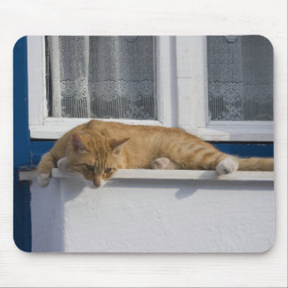 Greece, Mykonos. Curious orange tabby cat looks Mouse Pad