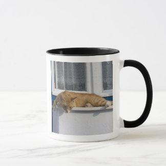 Greece, Mykonos. Curious orange tabby cat looks Mug