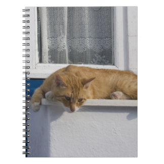 Greece, Mykonos. Curious orange tabby cat looks Notebooks