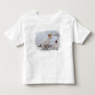 Greece, Mykonos, Kittens playing. Toddler T-Shirt