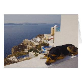 Greece, Santorini Island, Oia City, dog sleeping Card