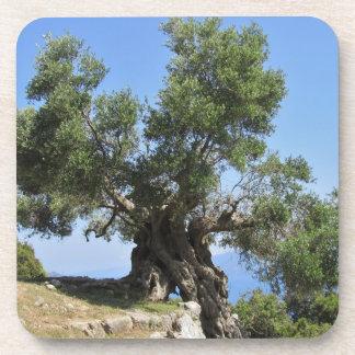 Greek Olive Tree (Kefalonia) Coaster
