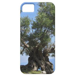 Greek Olive Tree (Kefalonia) iPhone 5 Cover