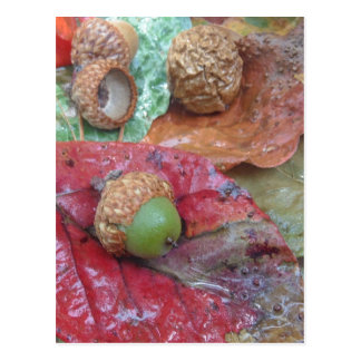 Green Acorn on a Red Fall Leaf Post Card