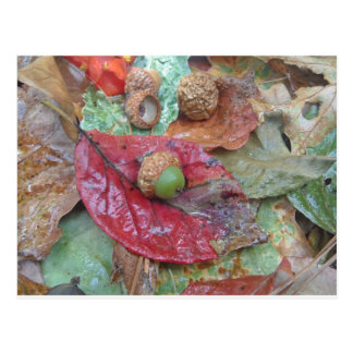 Green Acorn on a Red Fall Leaf Postcards