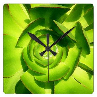 Green Aeonium Succulent by Amy Vangsgard Wall Clocks